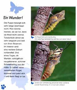 Walti Br 228 M Verlag Der Schmetterling border=