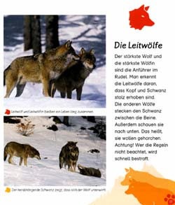 Walti Br 228 M Verlag Der Wolf border=